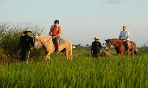Horse Riding and Jatiluwih Tour