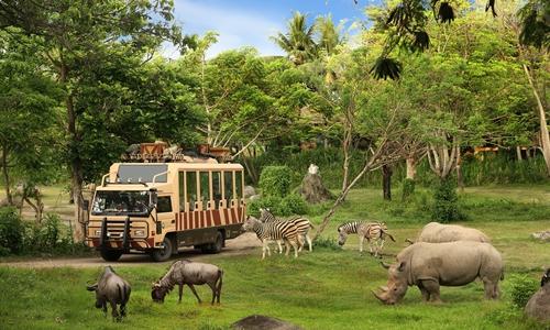 Bali Safari Park and Snorkeling Tour
