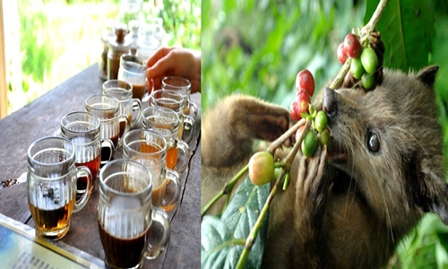Ubud Tours and Elephant Ride