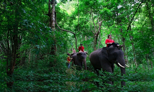 Ubud Tours and Elephant Ride