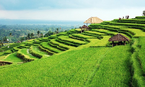 bali interesting places
