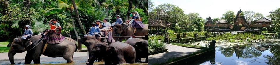 Bali Elephant Ride and Ubud Tours