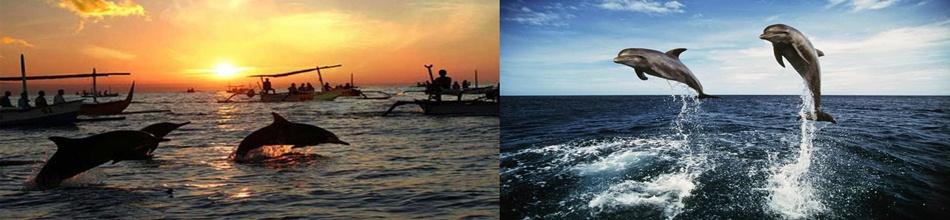Bali Dolphin Tours