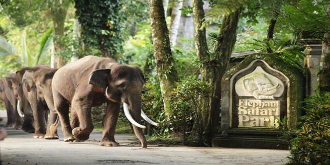Elephant Ride and Ubud Tours